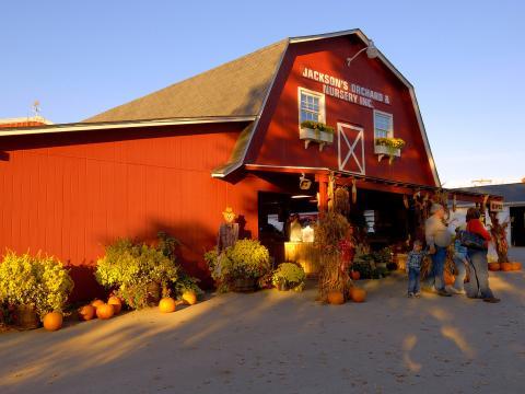 Jackson's Orchard Pumpkin Festival